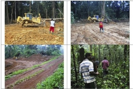 Scientists Sound Alarm on Massive Oil Palm Development in Cameroon | Biodiversity IS Life  – #Conservation #Ecosystems #Wildlife #Rivers #Forests #Environment | Scoop.it