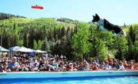 Vail dog soars to victory in GoPro Mountain Games comp   VailDaily.com   Fun for Dogs!   Scoop.it