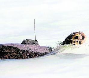 Des balises Argos au secours  des espèces menacées | Biodiversité & Relations Homme - Nature - Environnement : Un Scoop.it du Muséum de Toulouse | Scoop.it