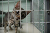 Bunny's Blog: Four Facts You Should Know About Cats & Shelters | Ask The Cat Doctor | Scoop.it