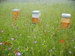 La loi sur la biodiversité biologique : une certaine déception ? | Environnement | Scoop.it