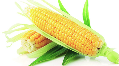India: On and off goes maize in Punjab   MAIZE   Scoop.it