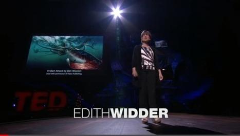 Open Source Underwater Robots for Exploration and Education   Peer2Politics   Scoop.it