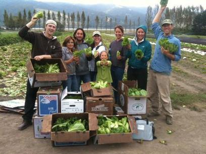 How to glean for good | Sustainable Futures | Scoop.it