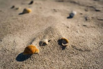 Seashells by the Seashore | Traveling and taking pictures | Scoop.it