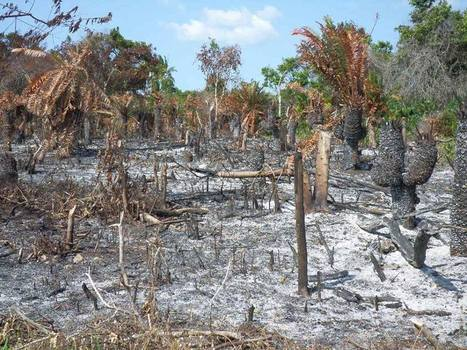 Green Microfinance in Zanzibar -> addressing coastal areas of deforestation of mangrove forests. | Climate-Smart Africa | Scoop.it