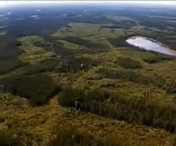 Scientists urge 50 percent protection of boreal forest: 'Amazon of the north' | Boreal forest biome | Scoop.it