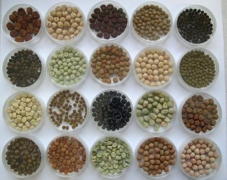 Appel à projet CASDAR Semences et sélection végétale 2015   JLGrego   Scoop.it