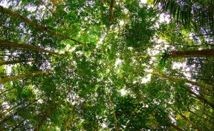 Amazon Trees Removed Almost a Third Less Carbon - Climate Central | Rainforest EXPLORER:  News & Notes | Scoop.it