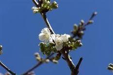 Cure détoxification, programme printemps et automne | La santé au naturel | Scoop.it