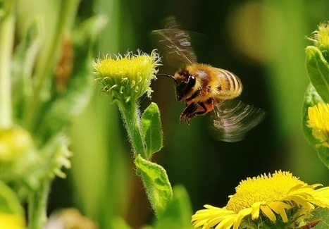 IPBES puts Biodiversity and Pollination front and centre | Pollinator conservation and diversity | Scoop.it