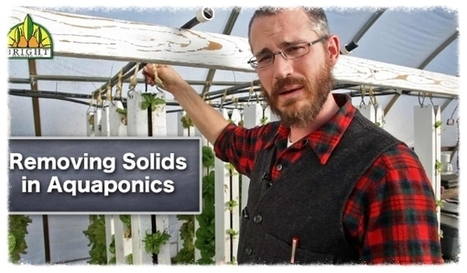 Solid Removal in Aquaponic Systems | Vertical Farm - Food Factory | Scoop.it
