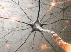 Memories May Not Live in Neurons' Synapses | Social Neuroscience Advances | Scoop.it