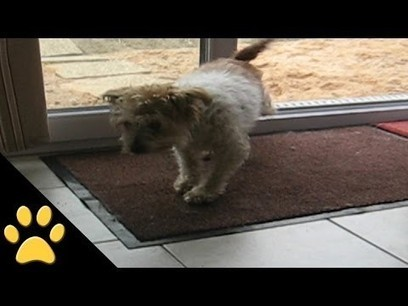Polite Dogs Wipe Their Feet | staged | Scoop.it