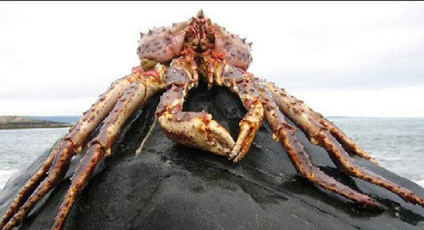 Watch a crab climb out of its old shell [VIDEO] | Weird Science | Scoop.it