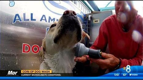 All American Coin-Operated Dog Wash | Where can I take my dog to the beach? | Scoop.it