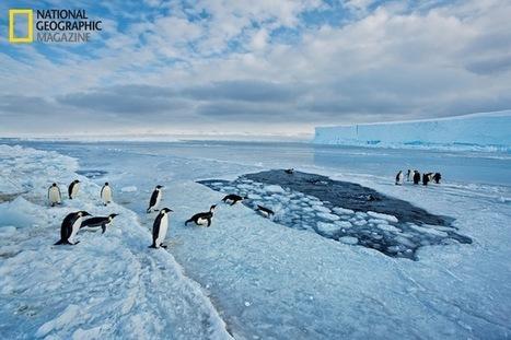 #Penguins #Launch #Out #of #Water   Le It e Amo ✪   Scoop.it