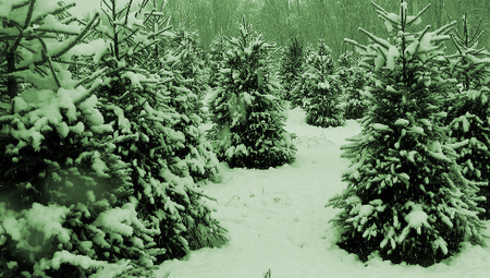 A new holiday trend: Renting Christmas trees | Trend Watching | Scoop.it
