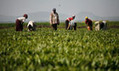 Global land deal guidelines could pave way to world without hunger   The Glory of the Garden   Scoop.it