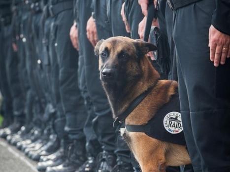 Attentats à Paris : Diesel, premier chien du Raid tué en opération | CaniCatNews-actualité | Scoop.it