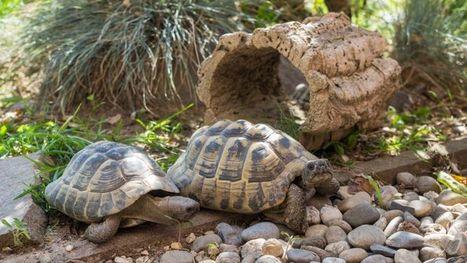 Dans le Var, cinq tortues bloquent un projet immobilier   On n'arrête pas le progrès !   Scoop.it