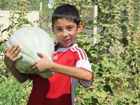 Program hosts annual farm camps, partners with local organizations   Inside Tucson Business   CALS in the News   Scoop.it