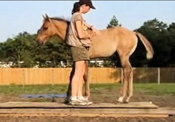 Training Foals | Holistic Horses from PENZANCE Equine Integrative Solutions | Scoop.it