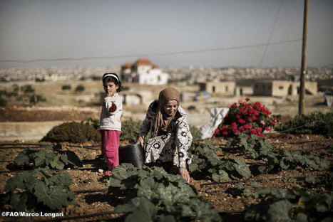 UN News - Water scarcity among critical food security issues in Near East and North Africa – UN | Sustainability Science | Scoop.it