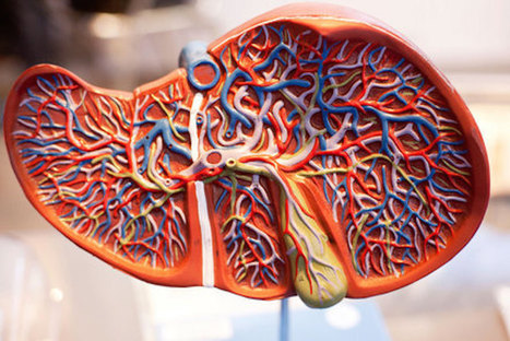 Liver Disease: Looking after Your Liver | Best Online Courses | Perspectives on Health & Nursing | Scoop.it