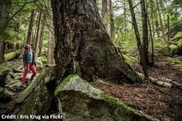 Le Shinrin-Yoku ou la nature comme médecine préventive ! | Le Cap Coaching | Scoop.it
