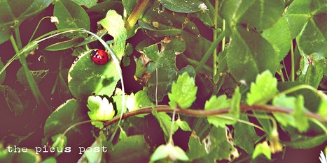 Le Marche Outdoor Activities: Wild Herbs Picking | Le Marche another Italy | Scoop.it