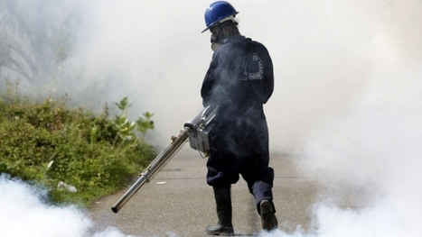 Zika virus: Thailand babies diagnosed with microcephaly | AP Human Geo in the News | Scoop.it