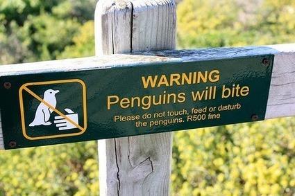 SEO Services Vancouver: Penguin Updates Denied but Panda 4.0 Bites ... | seo services vancouver | Scoop.it
