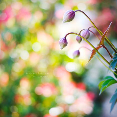 Défis du mois de mai. Sublimez les floraisons printanières ! | Photography Stuff For You | Scoop.it
