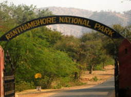 Visit National Parks During India Tour   Holiday Packages   Scoop.it