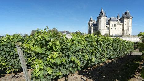 Les plus grands adeptes des vignobles français - Canoë | Oenotourisme | Scoop.it