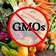 Genetically modified failures | The Barley Mow | Scoop.it