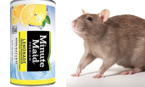Woman's claim against Coca-Cola crushed after finding rat in drink | coca with rats | Scoop.it