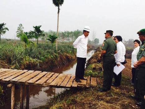 Incendies en Indonésie: le lobby de l'huile de palme enfin visé par le président | Pour une économie solidaire, équitable et durable | Scoop.it