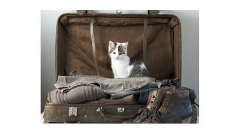 Les Français organisent leurs vacances avec leur chien et chat | CaniCatNews-actualité | Scoop.it