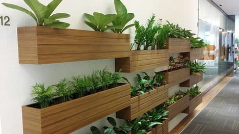 Office Plant Hire to Transform Your Workplace into Better | Foliage Indoor Plant Hire | Scoop.it