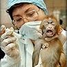 מדוע מחקר בבעלי-חיים הוא הכרחי? | ethics in animal experiments | Scoop.it