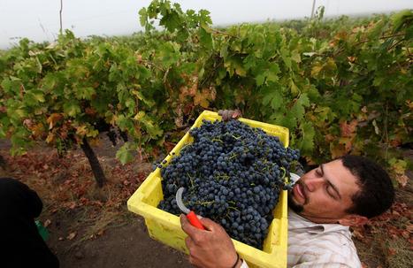 Les fermiers américains veulent qu'on leur rende leurs raisins | Le vin quotidien | Scoop.it
