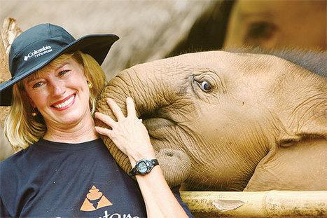 "Captive elephants ""suffering"" - Bangkok Post | Rhino poaching | Scoop.it"