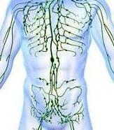 Comment améliorer un déséquilibre lymphatique | La santé au naturel | Scoop.it