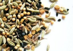 Reclaiming the seed: The First Link In The Food Chain | YOUR FOOD, YOUR HEALTH: Latest on BiotechFood, GMOs, Pesticides, Chemicals, CAFOs, Industrial Food | Scoop.it