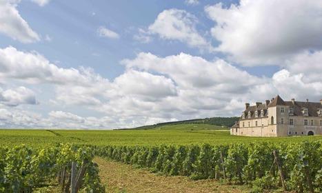 Le prix moyen des vignes en AOP a progressé de 3 % entre 2014 et 2015 | Winemak-in | Scoop.it