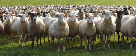 INRA - Biologie animale intégrative et gestion durable des productions animales | Ressources pédagogiques AIGEME | Scoop.it