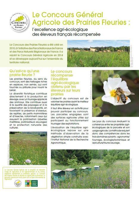 Concours des Prairies Fleuries : Edition 2016 | Les colocs du jardin | Scoop.it