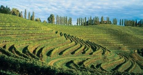 Bref regard sur les vins slovènes | World Wine Web | Scoop.it